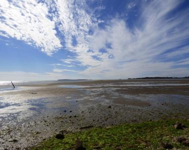 Unusually low tide at Cedar a Key.