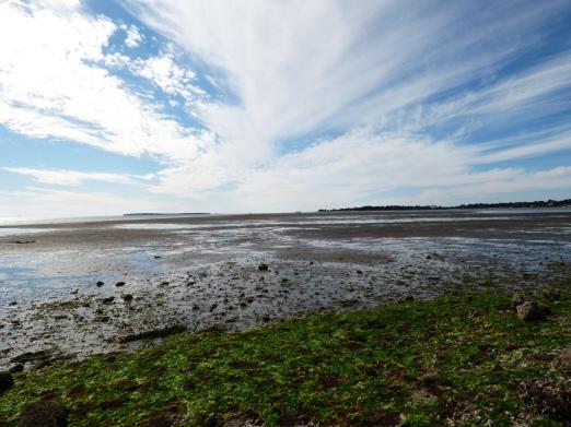 Extraordinarily low tide at Cedar Key